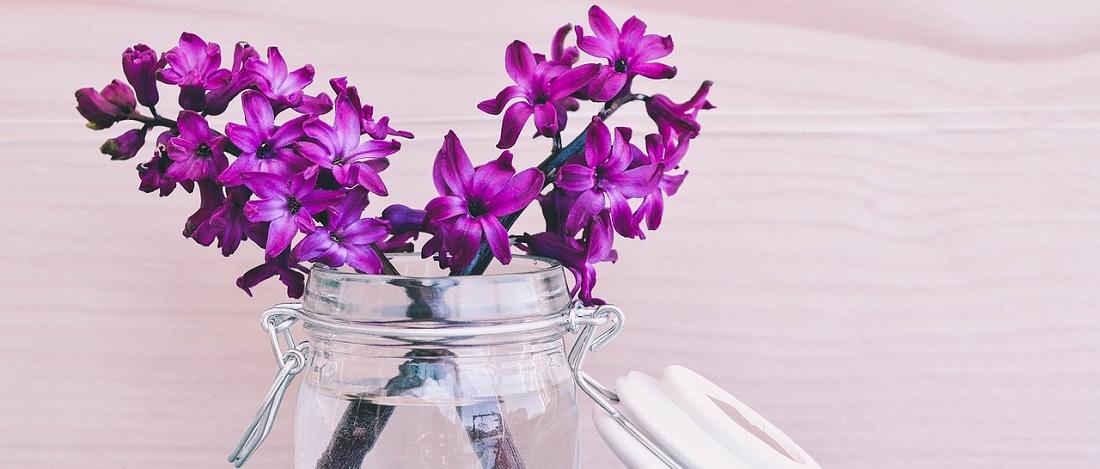 hyacinth-747157_1280